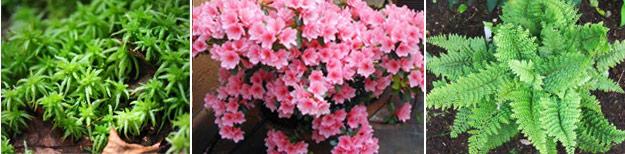 Растения, подходящие для флорариумы: сфагнум, папоротники, азалии